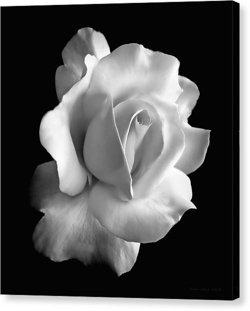 Black And White Rose Art