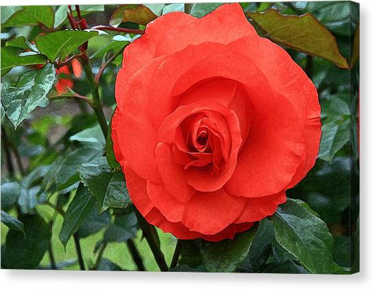 Portland Rose Garden Canvas Print by Margaret Hood