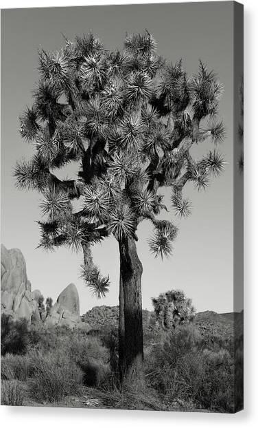 Mojave Desert Canvas Print - Portrait by Joseph Smith