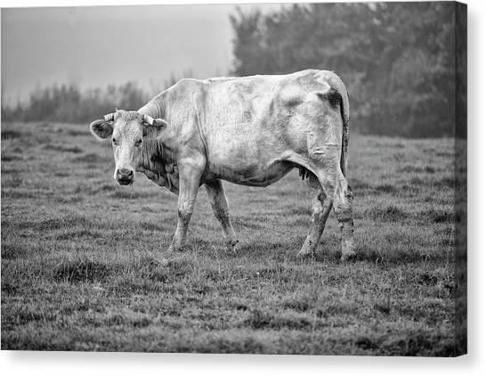 Cows Canvas Print - Portrait Of A Cow by Nailia Schwarz