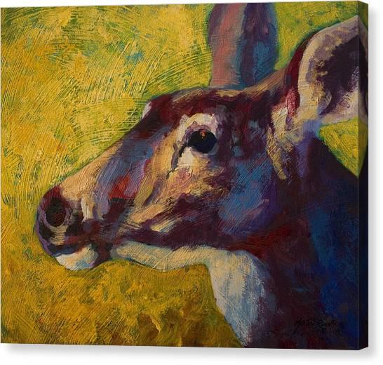 Mule Deer Canvas Print - Portrait Of A Doe by Marion Rose