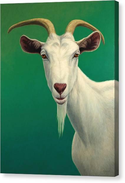 Green Canvas Print - Portrait Of A Goat by James W Johnson