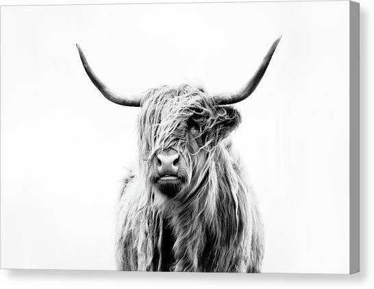 Farm Animal Canvas Print - Portrait Of A Highland Cow by Dorit Fuhg
