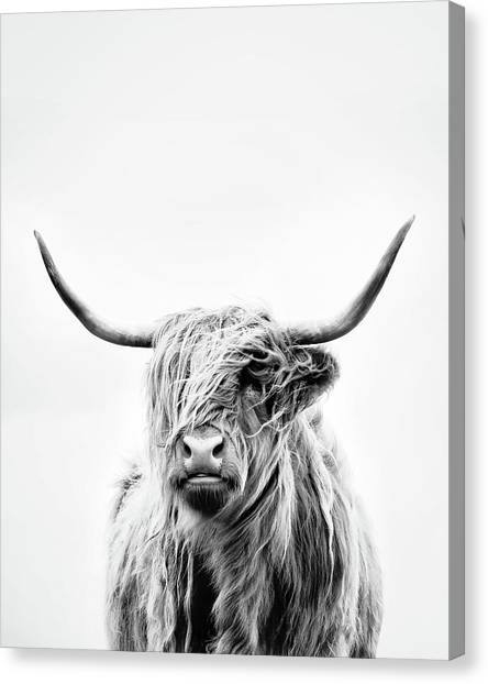 Cows Canvas Print - Portrait Of A Highland Cow - Vertical Orientation by Dorit Fuhg