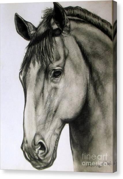 Portrait Of A Horse Canvas Print