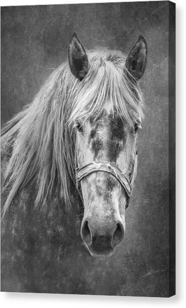 Black And White Art Canvas Print - Portrait Of A Horse by Tom Mc Nemar