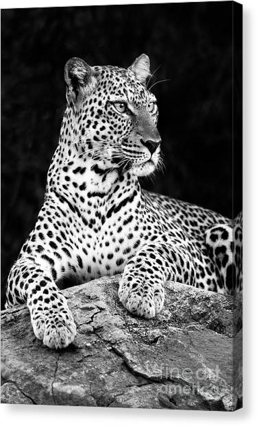 Kenyan Canvas Print - Portrait Of A Leopard by Richard Garvey-Williams