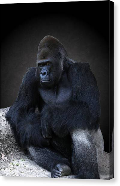 Portrait Of A Male Gorilla Canvas Print