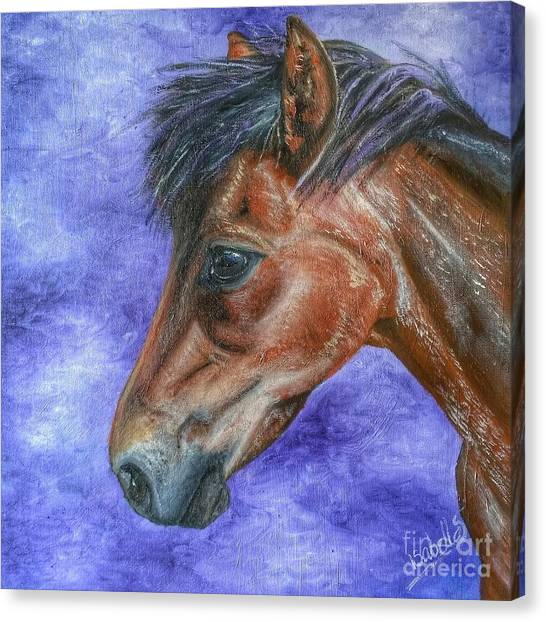 Portrait Of A Pony Canvas Print