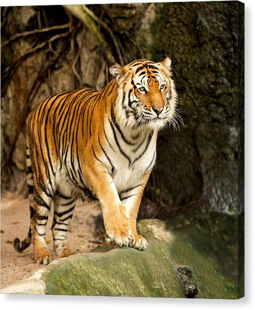 Portrait Of A Royal Bengal Tiger Canvas Print