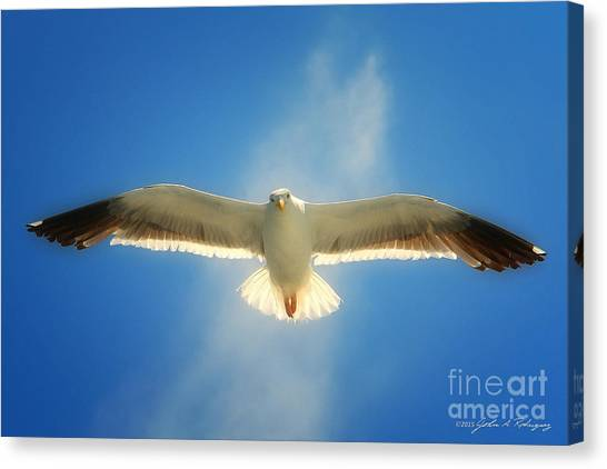 Portrait Of A Seagull Canvas Print