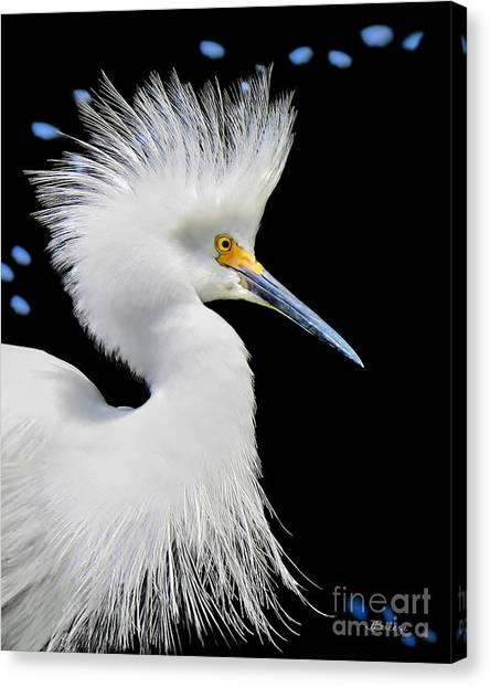 Portrait Of A Snowy White Egret Canvas Print