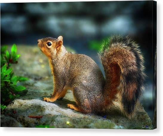 Portrait Of A Squirrell Canvas Print