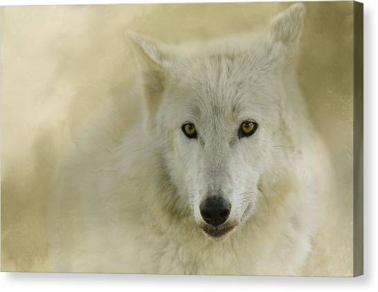 Arctic Wolf Canvas Print - Portrait Of A Timber Wolf by Jai Johnson