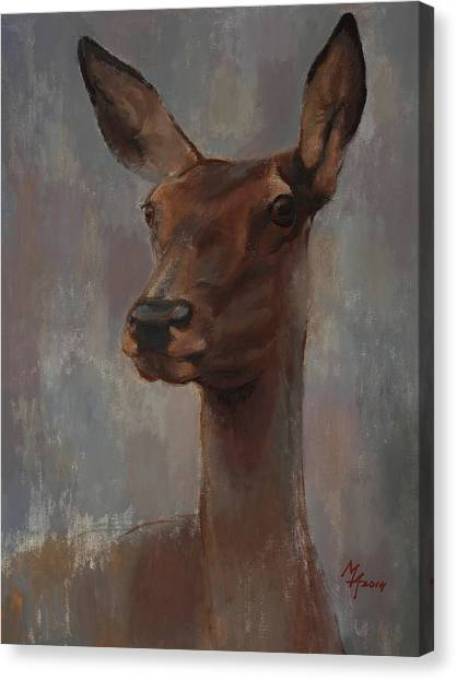 Portrait Of A Young Doe Canvas Print