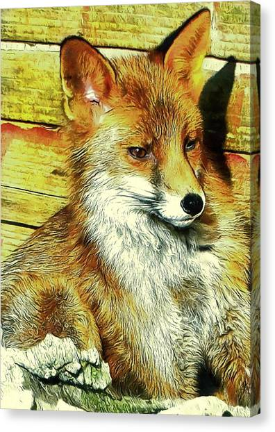 Portrait Of An Urban Fox Canvas Print
