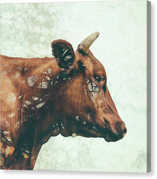 Cow Canvas Print - Portrait Of Bess by Katherine Smit