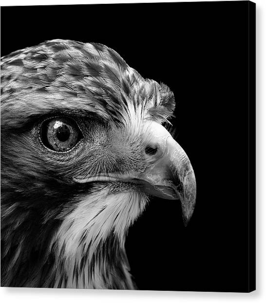 Zoo Canvas Print - Portrait Of Common Buzzard In Black And White by Lukas Holas