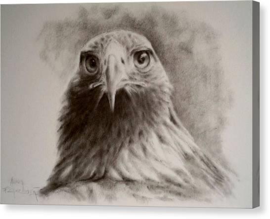 Portrait Of Eagle Canvas Print by Anna Franceova