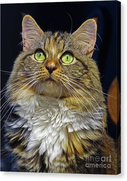 Portrait Of Holly Canvas Print