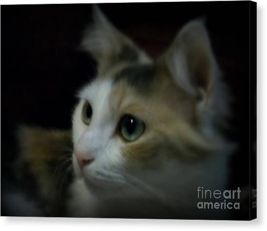 Portrait Of Miss Kitty Canvas Print by Emily Kelley