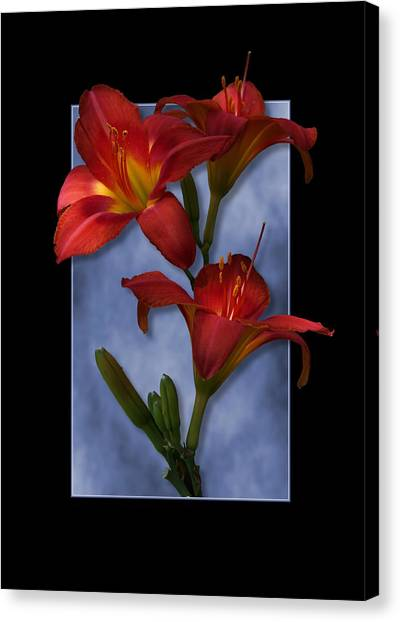 Portrait Of Red Lily Flowers Canvas Print