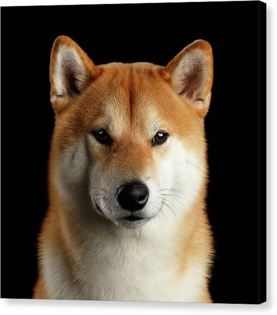 Dog Canvas Print - Portrait Of Shiba Inu by Sergey Taran