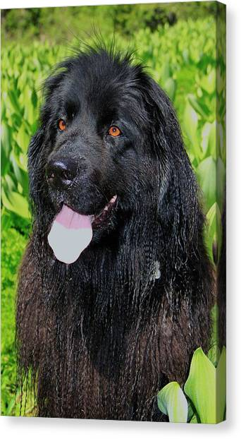 Canvas Print featuring the photograph Portrait Of Sierra by Sean Sarsfield