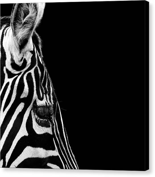 Zebras Canvas Print - Portrait Of Zebra In Black And White Iv by Lukas Holas
