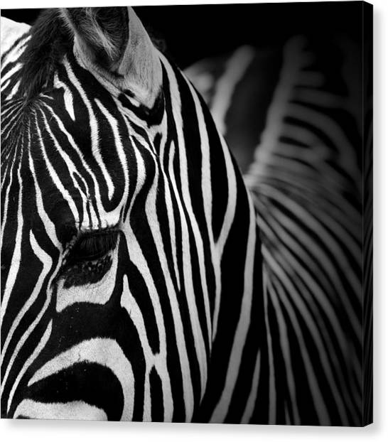 Zebras Canvas Print - Portrait Of Zebra In Black And White V by Lukas Holas