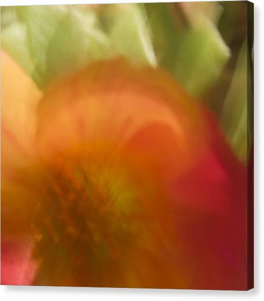 Portulaca I Canvas Print
