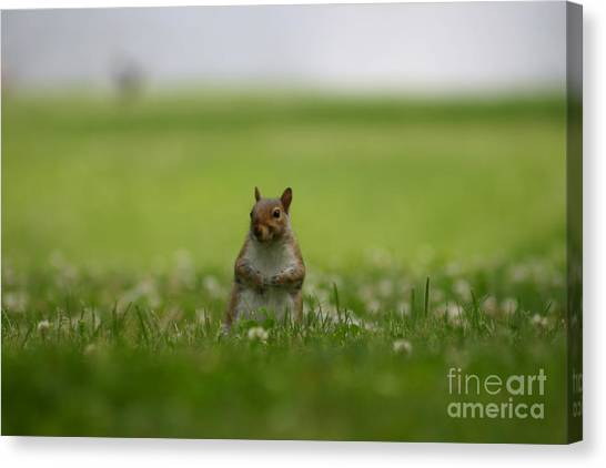 Posing Squirrel Canvas Print