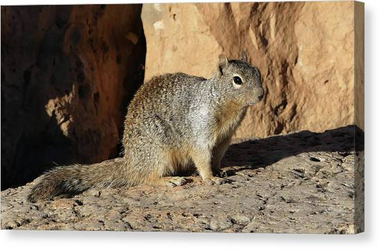 Posing Squirrel Canvas Print
