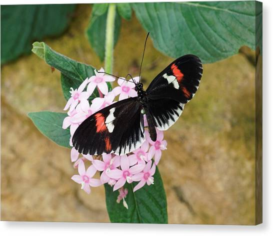 Canvas Print featuring the photograph Postman Butterfly, Heliconius Melpomene by Paul Gulliver