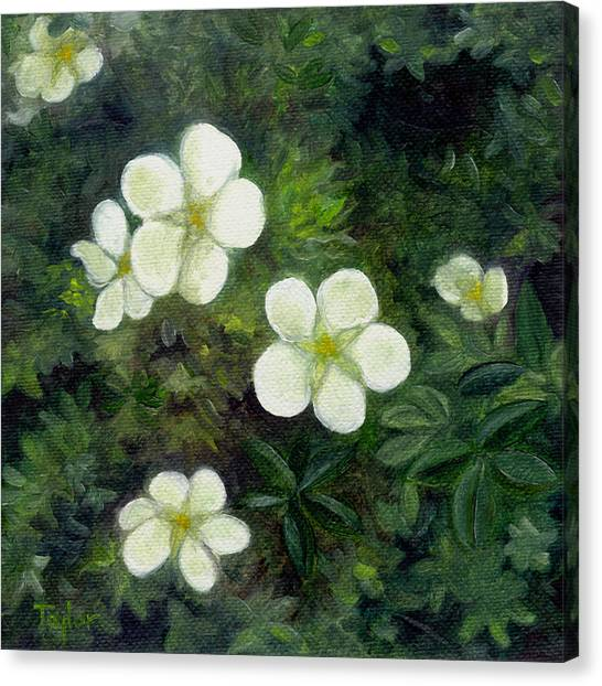 Potentilla Canvas Print