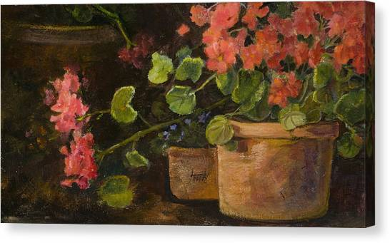 Pots Of Geraniums Canvas Print by Jimmie Trotter