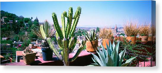 San Miguel De Allende Canvas Print - Potted Plants On Terrace Of A Building by Panoramic Images