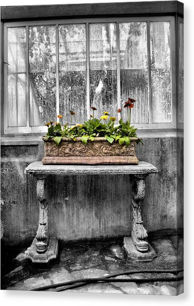 Potted Canvas Print by Russell Styles