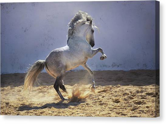Power In Motion Canvas Print
