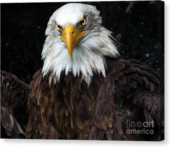 Power Of The Eagle Canvas Print