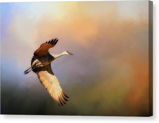 Power Stroke, Sandhill Crane, Bosque Del Apache, New Mexico Canvas Print