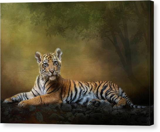 Practicing My Big Kitty Stare Canvas Print