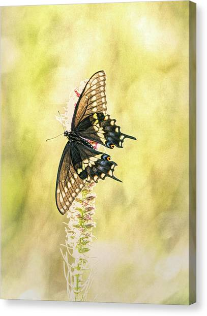 Prairie Butterfly 2 Canvas Print
