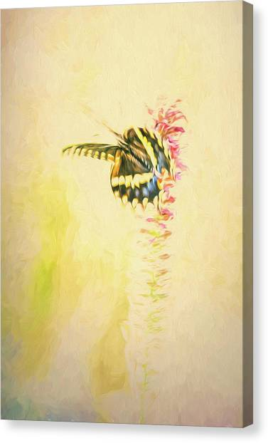 Prairie Butterfly 3 Canvas Print