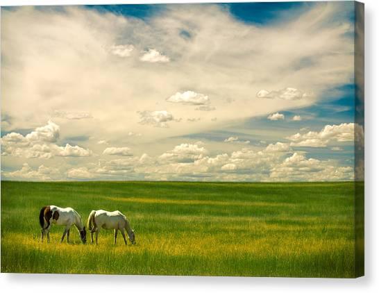 Prairie Horses Canvas Print