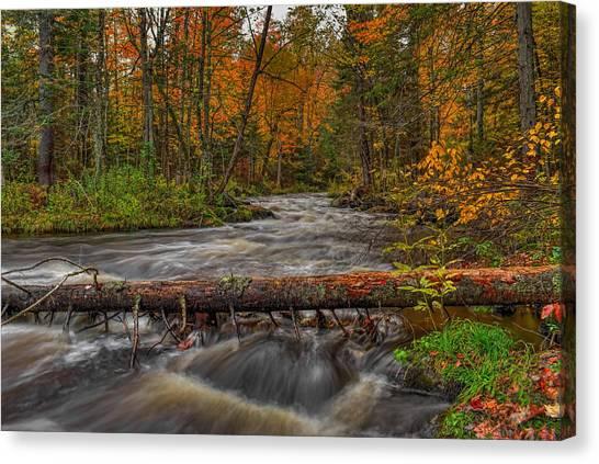 Prairie River Tree Crossing Canvas Print
