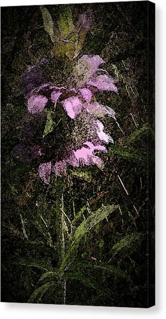 Prairie Weed Flower Canvas Print