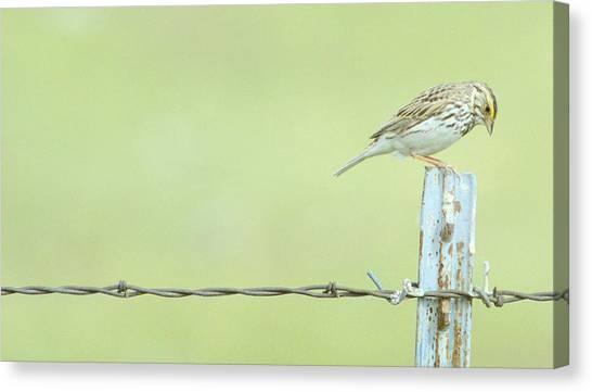 Meadowlarks Canvas Print - Prayer Time.. by Al  Swasey