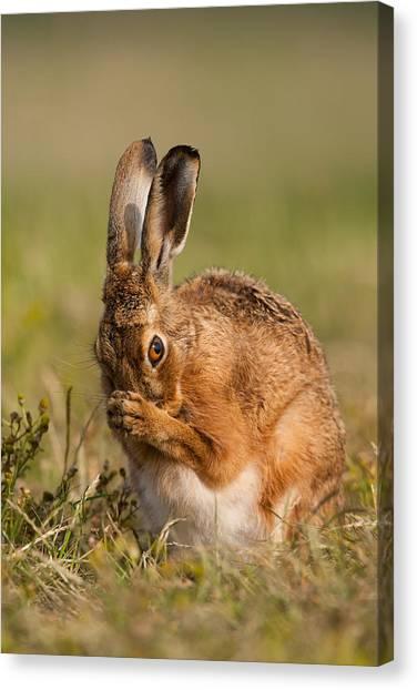 Praying Hare Canvas Print