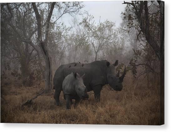 Rhinos Canvas Print - Pre Dawn Encounter by Andre Victor